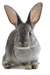 pet rabbit Unintended Victims  Diagnosis & Treatment  social work continuing ed