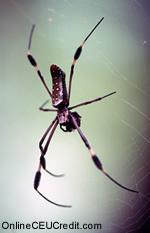 afraid of spiders Phobias counselor CEU